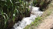 L'irrigation de la palmeraie se fait grâce à l'eau de l'oued