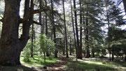 Balade magnifique en forêt