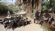 Rencontre avec des bergers