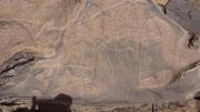 Gravure rupestre: autruche