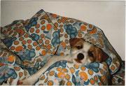 Birka by Windrush beim Mittagsschlaf