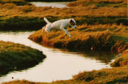 Arthur by Windrush beim Sprung über den Graben