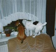 Daphne und Queenie schauen was draußen so los ist