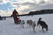 Huskytour in Schweden