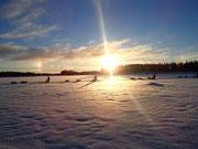 Hundeschlitten auf Tour in Lappland