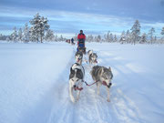 Hundeschlitten & Lappland