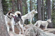 Lappland Dream Kennel