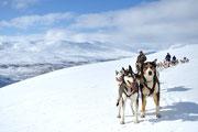 Hundeschlitten in Lappland