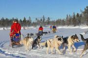 Huskytour  in Lappland