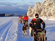 Schlittenhundetouren in Lappland