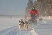 Hundeschlittenreisen in Schweden