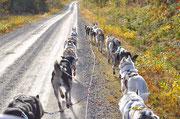 Hundeschlittenfahrten in Schweden
