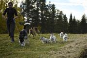 Welpen in Lappland begleiten