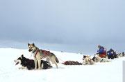 Wohlverdiente Pause nach einer schönene Huskytour im Gebirge