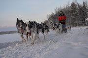 Huskypower durch Lappland