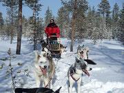 Winterurlaub in Lappland mit Schlittenhunden