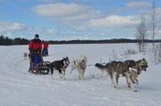 Mit dem Huskygespann diurch Lappland