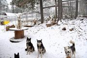 Die Hunde  freuen sich über den ersten Schnee