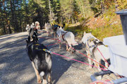Bergaufträning  unserer Schlittenhunde