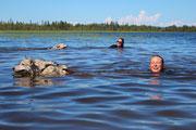 Schwimmen für Schlittenhunde im Juktån Fluss