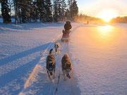 äventyr och hundspann i lappland