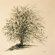 Lichen_1 - 50x50