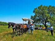 Sonntags-Ausflug mit dem Pferdegespann