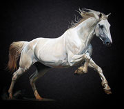 """White Horse"" Gouache on Blackboard 40x50cm SOLD"