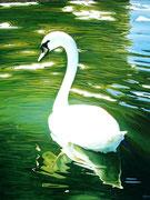 """Lonesome Swan"" Acrylic 75x50cm"