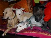 ElfeAnnabelle,Lucy,MataHari und Heintje.