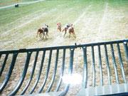 Start in Bad Homburg......Lucy gewann,hier unter rot,auch dieses Rennen mit Abstand und lief auch mal eben den Bahnrekord.(Die in der Mitte unter rot).