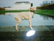 Schloß Augustusbuerg 1997