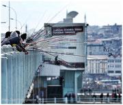 les cannes des pêcheurs du pont Galata qui relie les deux rives du Bosphore