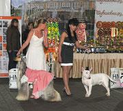 "Победители конкурса ""Дама с собакой"" (Фото от Anna Kuznetsova & pembrokes ""Style Life"" )"