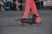 AL Tsarskiy Podarok - CW puppy class