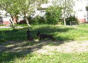 Перед отъездом: много травы и солнца, собаки довольны.