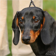 Thilia Thalian Precious (Prosha) - CW, BOS puppy