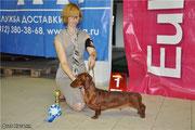 Руди выиграл класс юниоров из 4 собак на двух выставках сегодня!