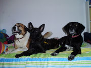 Nico, Lausbua und Timo