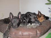 Lausbua, Timo und Cindy beim Ausruhen