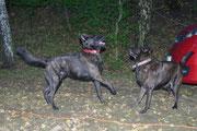 Lausbua und Mama Hexe spielen abends gemeinsam