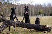 Die drei Musketiere :)