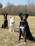 Lausbua, Jamaina und Timo