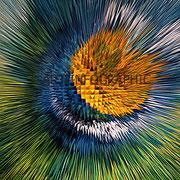 Chardon - Art Numérique - Sous plexi - 50 x  50 cm