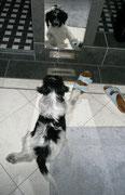 Da ist er wieder, der andere Hund im Bad.