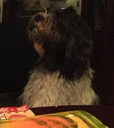 Ich bin schon beinahe wieder weg, War hier ein Hund am Tisch???