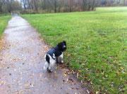 Selbst, wenn es draussen nass und ungemütlich ist, muß ich mit Frauchen durch die Gegend rennen. Zum Glück habe ich einen Regenmantel, Frauchen hat auch einen.