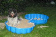 Meinen Pool, in den ich nicht hineingehe, hat sie jetzt mit Sand gefüllt. Ich glaube, da WILL ich nicht 'rein. Ich liebe die Sandkiste auf dem Spielplatz, aber da DARF ich nicht hinein.