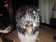 Schnee ist toll! Frauchen findet Schnee auch toll, aber nicht drinnen.