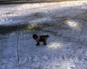 Jetzt ist der Schnee schon beinahe wieder weg, leider.